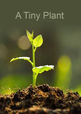A Tiny Plant
