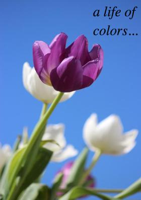 A Life Of Colors...