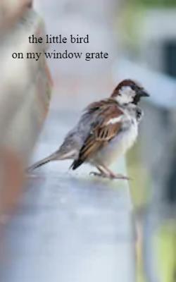 The Little Bird On My Grate