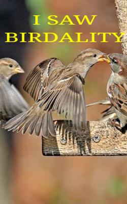 I Saw Birdality