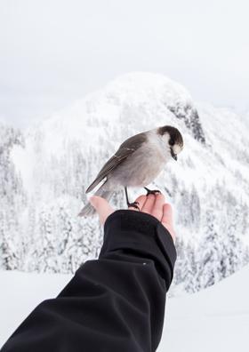 सांस-भर सांस जीने दो चिड़िया को