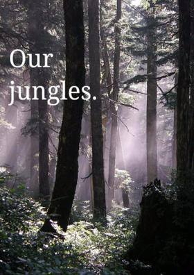 Our Jungles.