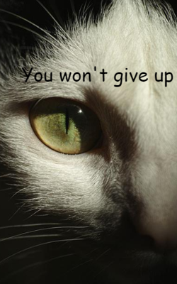 You Won't Give Up