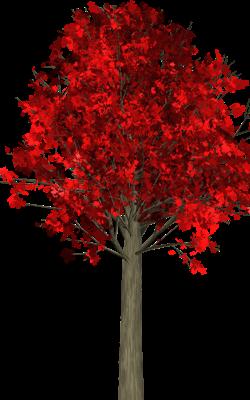 Autumn (a haiku)
