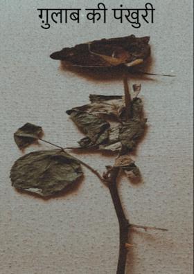 गुलाब की पंखुड़ी