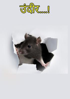 उंदीर....!