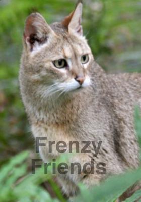 Frenzy Friends
