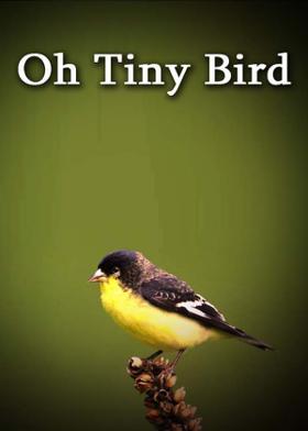 Oh Tiny Bird
