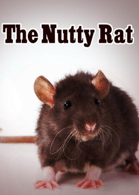 The nutty rat