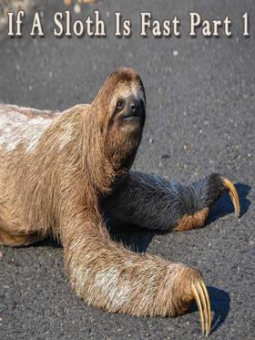 If A Sloth Is Fast Part 1