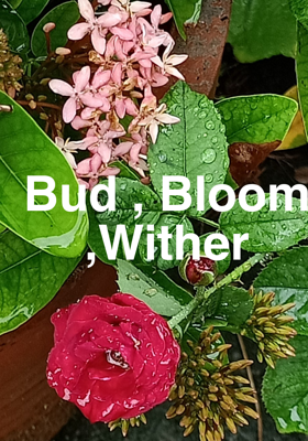 Bud, Bloom, Wither