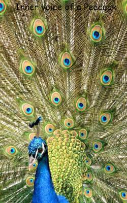 An Inner voice of a Peacock