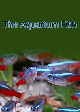 The Aquarium Fish