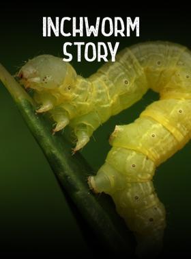 Inchworm Story