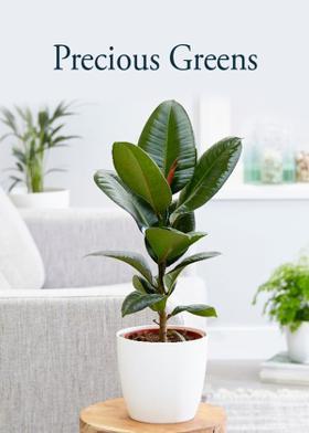 Precious Greens