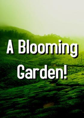 A Blooming Garden!
