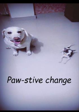 Paw-stive Change