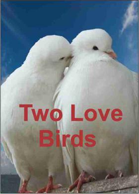 Two Love Birds...