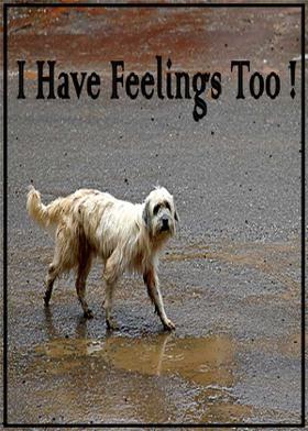 I Have Feelings Too !