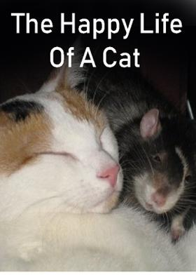 The Happy Life Of A Cat